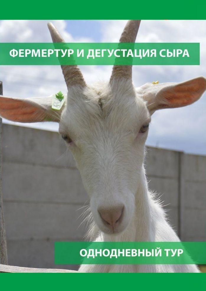 Фермертур и дегустация сыра