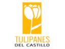 Tulipanes15160331211516033121