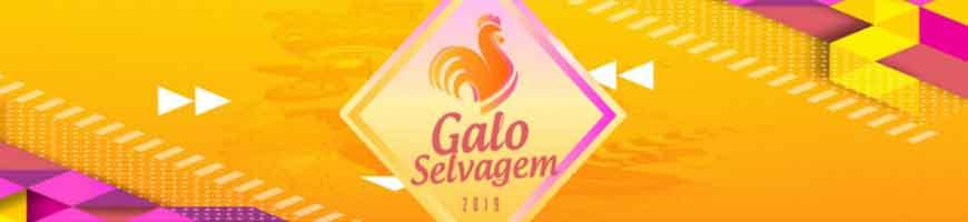 CAMAROTE GALO SELVAGEM NO GALO DA MADRUGADA