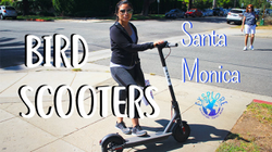 Bird Scooter: Transportation Startup/App in LA | Review - Info - Promo Code