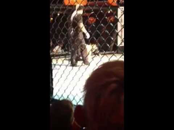 Joe Penafiel vs Felix Roca
