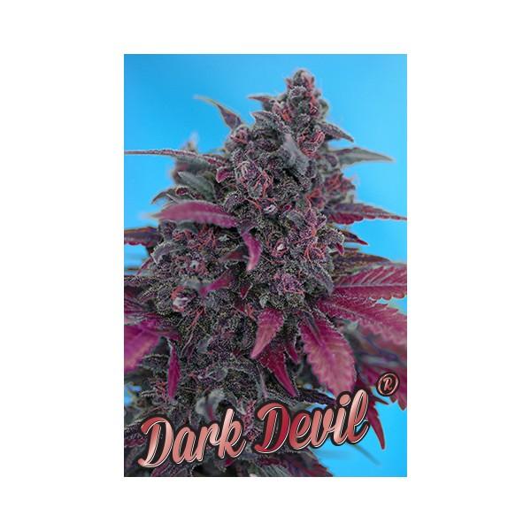 Sweet: Auto Dark Devil