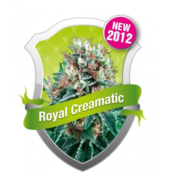 Royal Queen Seeds: Royal Creamatic