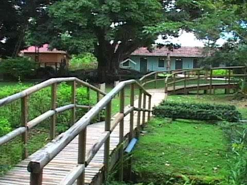 Caguas for Actividades en el jardin botanico de caguas
