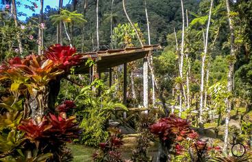 actvite Jardin de Balata  Martinique