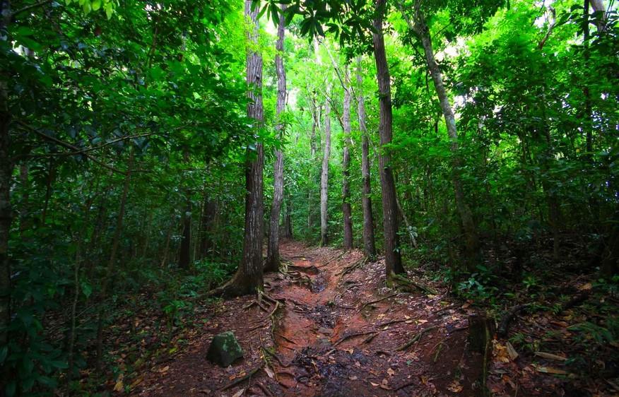 actvite La forêt de Montravail Martinique