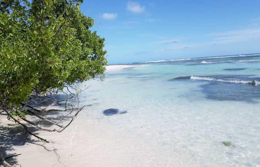 actvite Bois Jolan Beach Guadeloupe