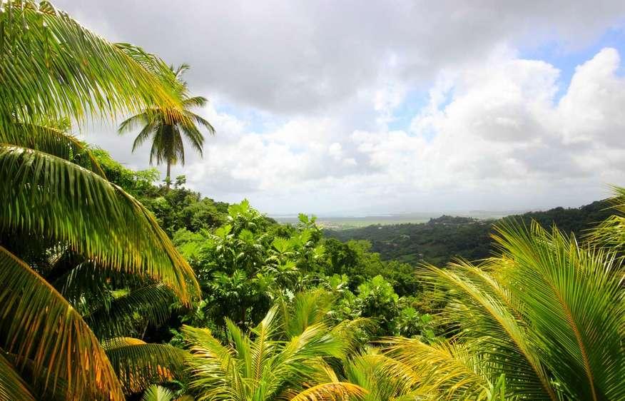 photo Martinique Rivière Salée