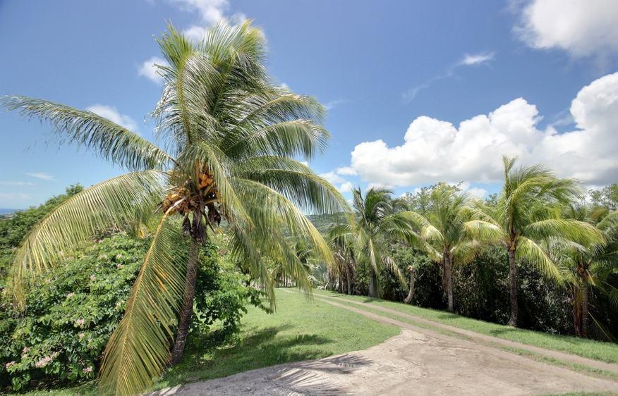 location Villa Olga Vauclin Martinique