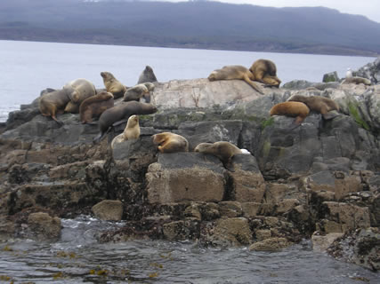 Sea lions at Isla de los Lobos in the Beagle Channel