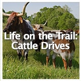 Reconstruction and Frontiers Life on the Trail: Cattle Drives