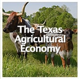 Reconstruction and Frontiers The Texas Agricultural Economy