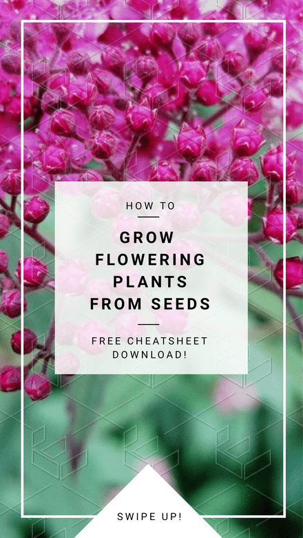 How to Grow Flowering Plants from Seeds Blog Header
