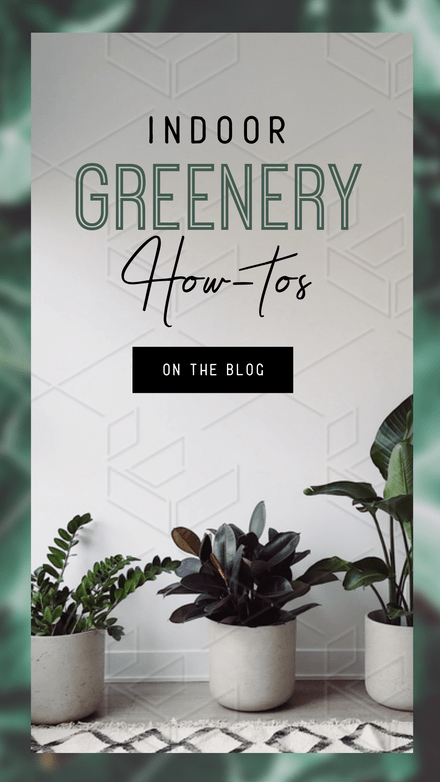 Indoor Greenery How To Graphic Template