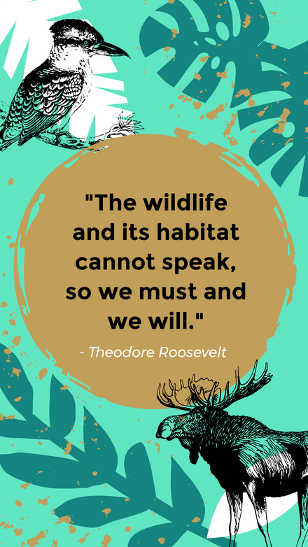 4th September - National Wildlife Day