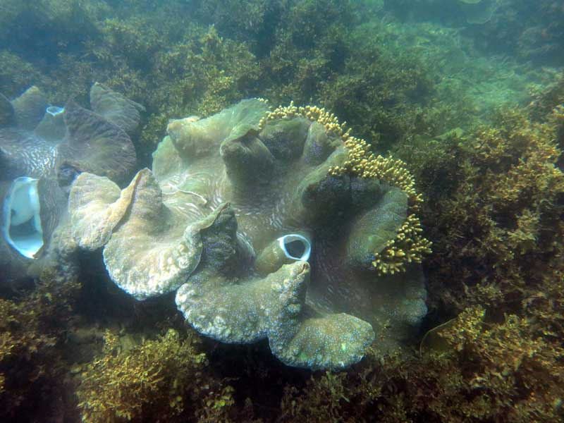 Giant Clams and unexpected impacts by ACIAR