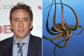 Nicolas cage and an octopus article