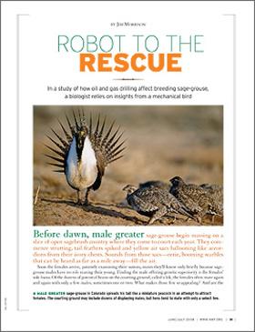 Sage grouse jj08 1 article
