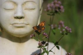 Peaceful buddha article