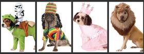 Halloween pet costumes article