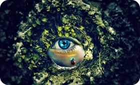Eyes is our soul to gain authenticity from others so always be transparent to everyone easy branches article