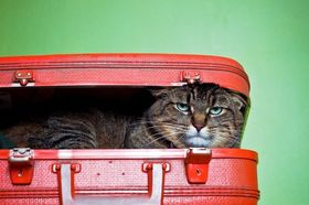 Cat in a suitcase article