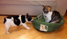 Trending cat dog bed article