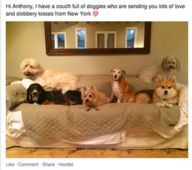 Trending doggies for anthony article