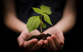 Hand holding plant ftr article
