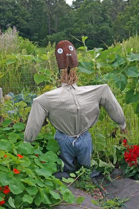Community garden scarecrow 1 article