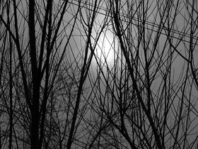 Winter through branches article