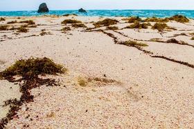 Bermuda   beach   didrik johnck big article