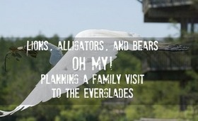 Everglades featured article