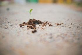 Grow savings article