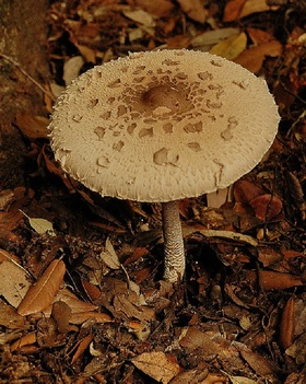 Mushrooms article
