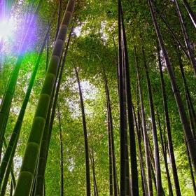 Truth about bamboo article