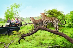 Safaris 1024x682 article