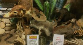 Squirrel 720x396 article