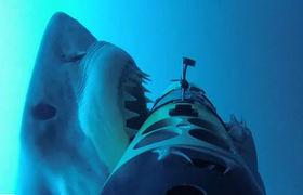 Shark week article