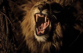 Sizematters roar summer2011 article