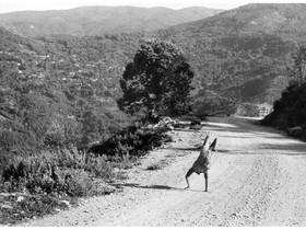 Epirus grecia foto di henri cartier bresson 1961 700x525c article