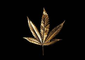 Pot leafweb article