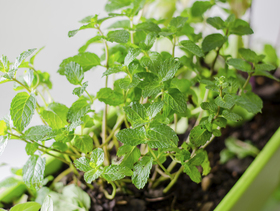 5 plants anyone can grow article