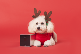 1165063 10 perfect gifts for the dog lovers on your list dogvacay article