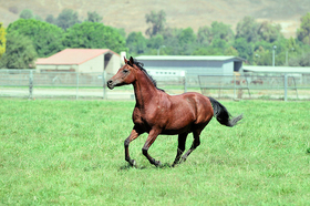 Horse running 640 article