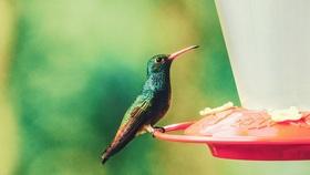 Humming bird article