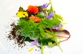 Manresa salad course article