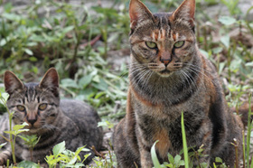 Bigstock stray cats 29979488 article