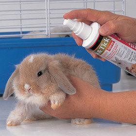 Rabbit parasites 20jpg article