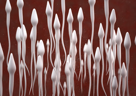 Sperm article